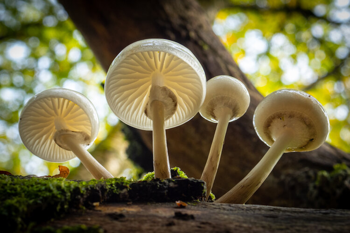 article thumb - Fungus amongus: common mushrooms in England