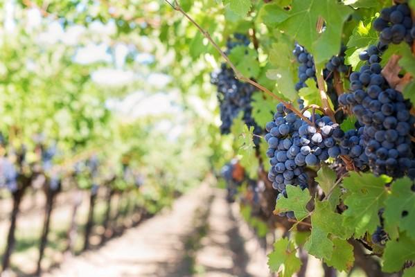 Forgotten Grapes Around The World at Mercato Metropolitano
